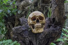 Skull and bones digged out from pit in the scary graveyard found in the jungle. Do not know gender, do not know the name, wait for. Proof of results./Still life stock photo