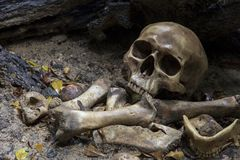 Skull and bones digged  in the  pit  with old timbers, Concept halloween day. Still life style royalty free stock photography