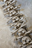 Skull bones Stock Photos