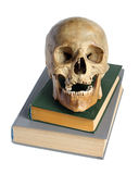 Skull and the book. Royalty Free Stock Photo