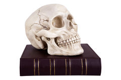 Skull on book Stock Image