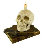 Skull with books Royalty Free Stock Image