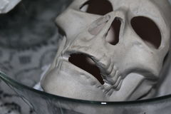 Skull in a bowl royalty free stock image