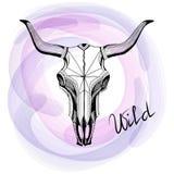 Skull bull, drawing ink Royalty Free Stock Photography