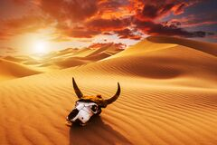 Free Skull Bull In The Sand Desert At Sunset. The Concept Of Death And End Of Life Royalty Free Stock Photo - 173197385