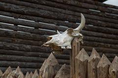 The skull of a bull Stock Image