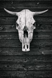 The skull of a bull. wooden texture Stock Image