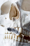 Skull with burning cigarette Stock Images