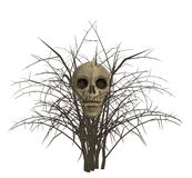 Skull In Bush Royalty Free Stock Images