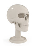 Skull Bust - Human Anatomy isolated on white Stock Images