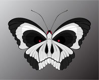Skull-butterfly Royalty Free Stock Photo