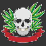 Skull and Cannabis. Cannabis leafs and skull on black grunge background Stock Images