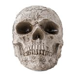 Skull with carved pattern isolated on white background Stock Photography