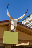 Skull of cattle with horns Royalty Free Stock Photo
