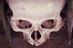 Skull of Cemetery in Naples - Italy Stock Image