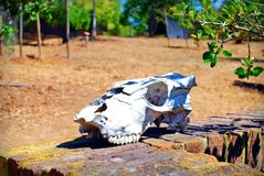 Skull in Chile. A skull lying on a wall in Chile bathed in sunlight and heat Royalty Free Stock Photography