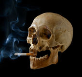 Skull with a cigarette. Stock Photo