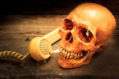 Skull with cigarette, still life. Royalty Free Stock Images