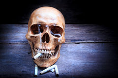 Skull with cigarettes, still life. Stock Photo
