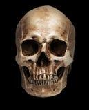 Skull-close mouth Royalty Free Stock Image