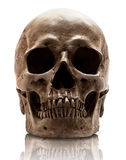 Skull-close mouth Royalty Free Stock Photography