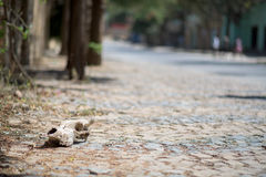Skull on the cobblestone street in Ethiopia Royalty Free Stock Image