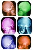 Skull collection in colours Stock Photo
