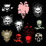 Skull collection Stock Images