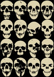 Skull collection Stock Photography