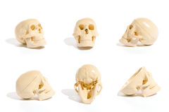 Skull Collection Stock Image