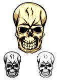 Skull color dwa Stock Photos