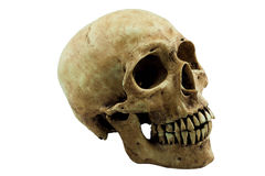 Skull. Concept on white background : clipping path royalty free stock photo