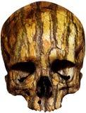 Skull covered with tree bark Royalty Free Stock Photo