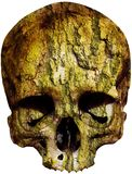 Skull covered with tree bark. Weathered Skull covered with tree bark Also available as isolated PNG-file Stock Image