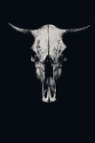Skull of a cow or a bull Royalty Free Stock Photography