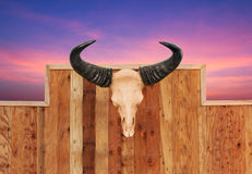 Skull cow hung on wall Royalty Free Stock Photography