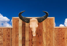 Skull cow hung on wall Stock Photos