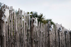 Skull of a cow set on wooden fence. Magic Stock Images