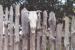 Skull of a cow set on wooden fence. Magic Royalty Free Stock Photo