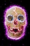 Skull cranium. stock photos