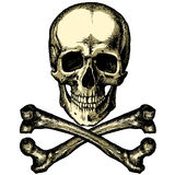 A skull and crossbones on a blank background Stock Photography