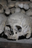 Skull in the crypt Stock Images