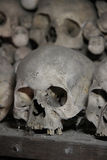 Skull in the crypt Royalty Free Stock Image