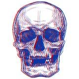 Skull 3D vector illustration