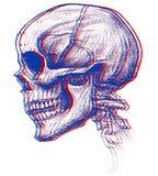 Skull 3D Stock Photography