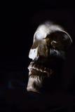 Skull in the dark Stock Photography