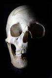 Skull in the dark. Skull with black background without some teeth Royalty Free Stock Image