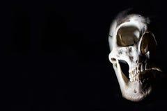 Skull in the dark Stock Image