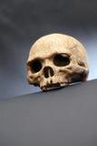 Skull On Dark Royalty Free Stock Image