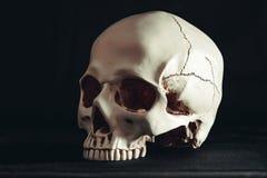 Skull in the dark. Human skull on dark background stock photo